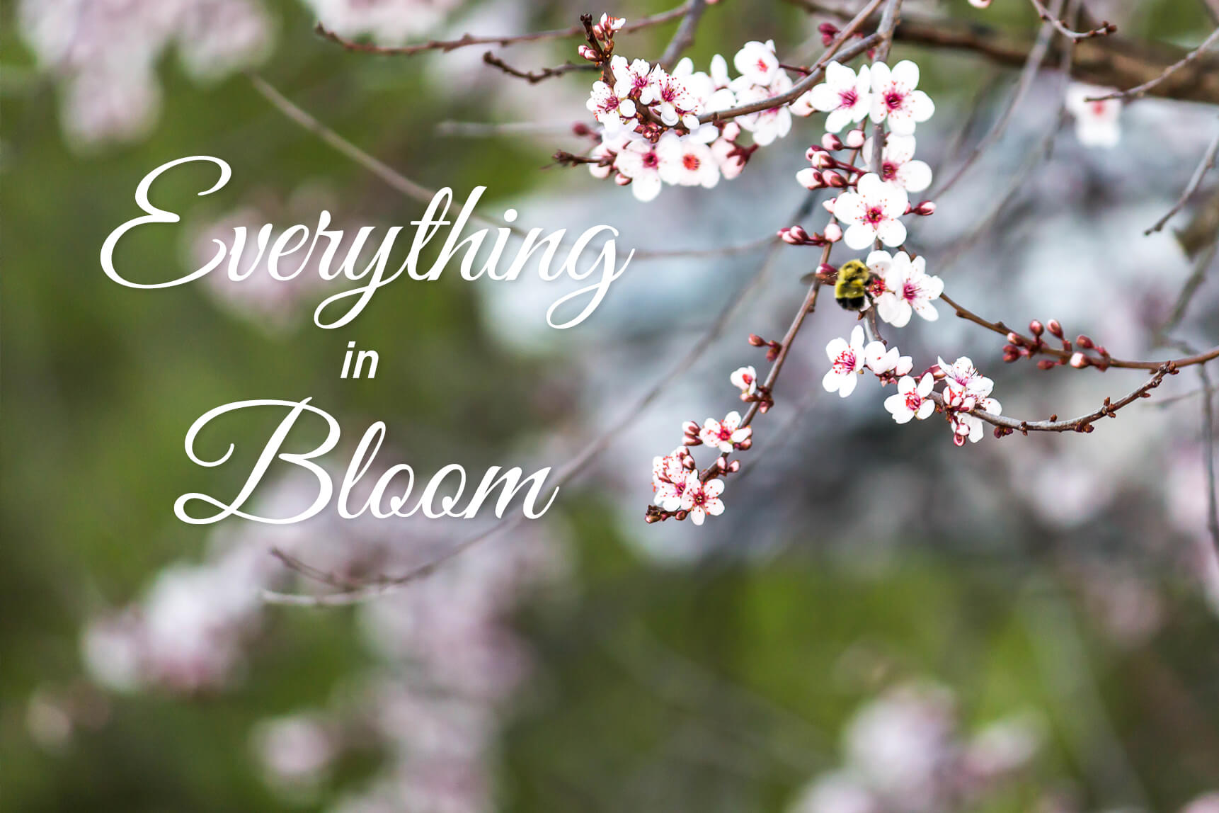Everything in Bloom
