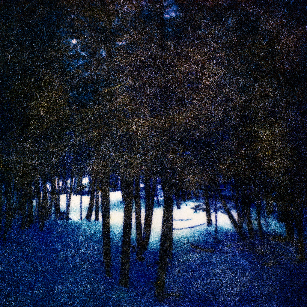 Stephen Schaub Blue Forest