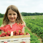 strawberry-harvesting