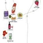 picnic-map-03
