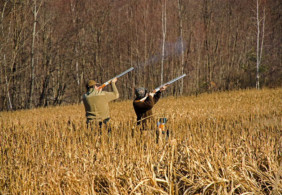 sporting life wingshooting