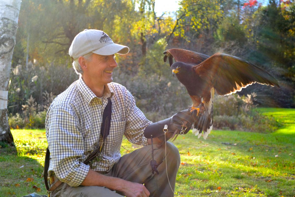 green mountain falconry