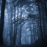 spooky-misty-rainy-forest-located-in-transylvania-romania-halloween-holiday-celebration-background-concept